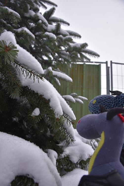 Luna und Kiwii bewundern das verschneite Bäumchen