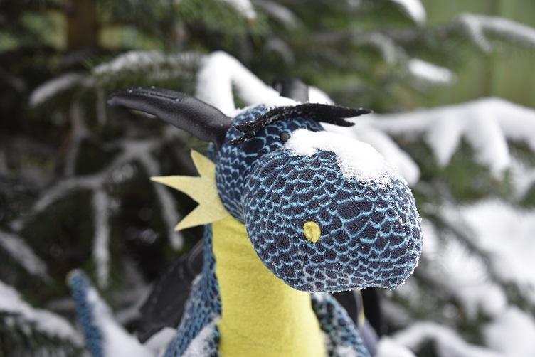 Kiwii mit Schnee auf der Nase