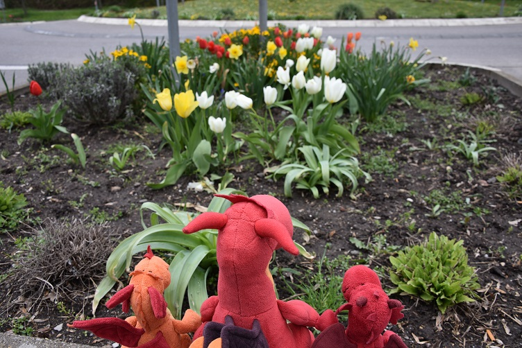 Drachis mit Blumen