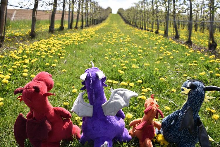 Drachen auf Plantage mit Löwenzahn