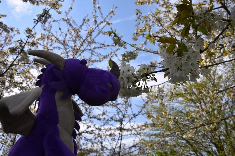 Violetta mit blühendem Baum