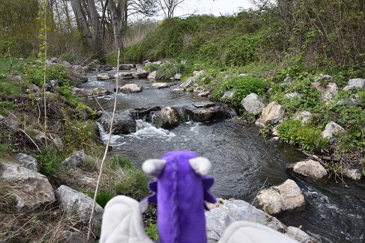 Violetta am Wasser