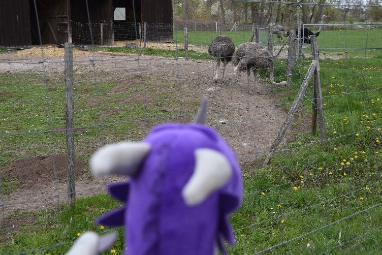 Violetta und Strauße