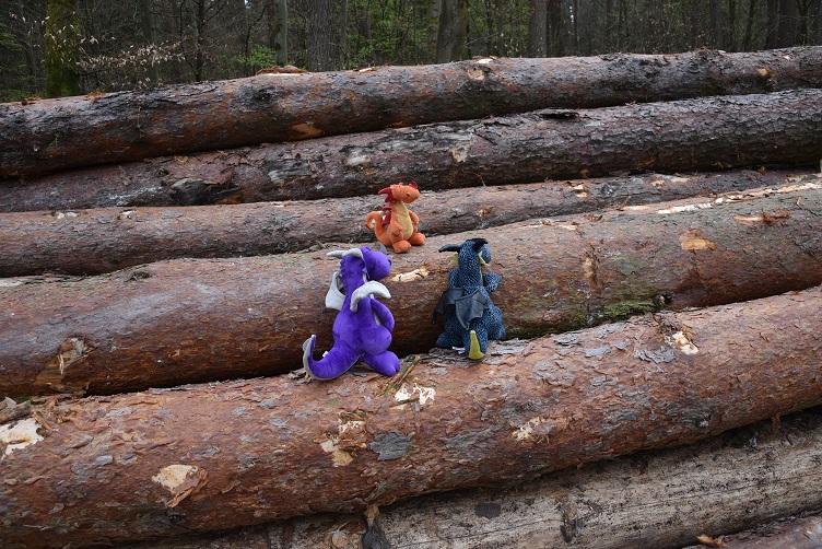 Drachis auf Baumstämmen