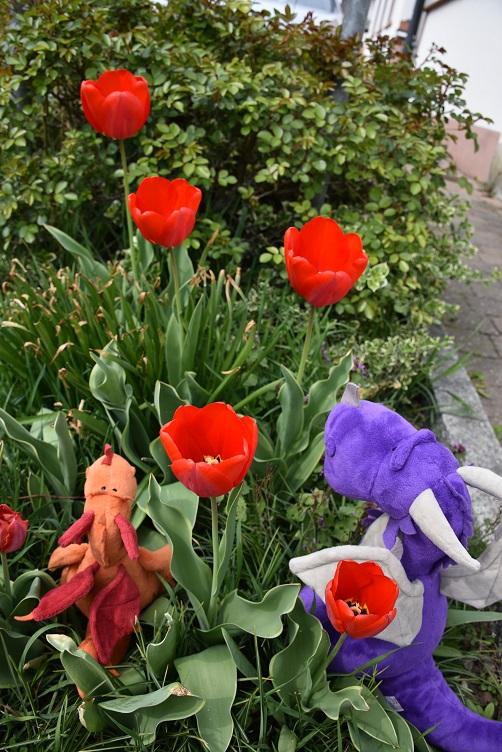 Paffina und Violetta mit Tulpen