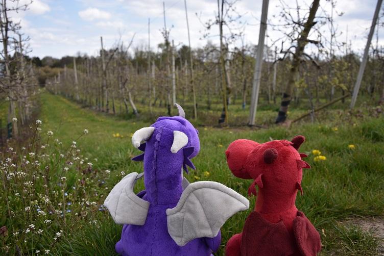 Violetta und Ruby gucken auf Apfelplantage