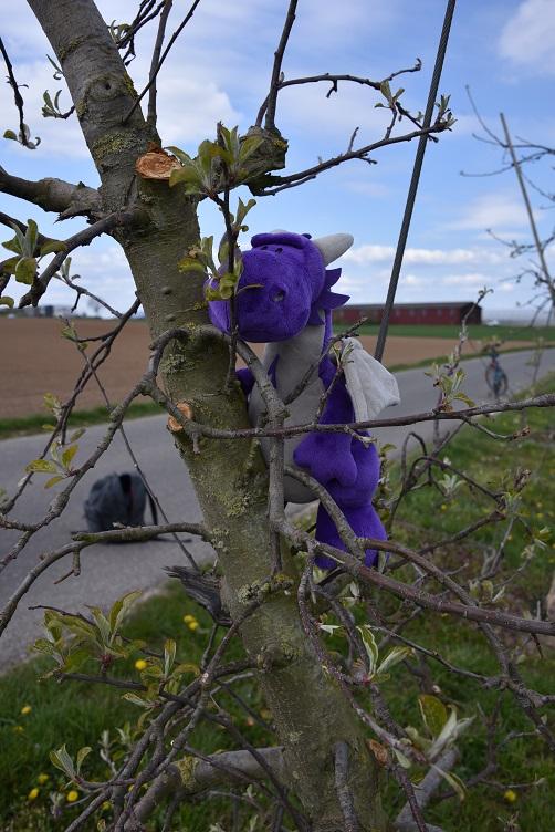 Violetta im Apfelbaum