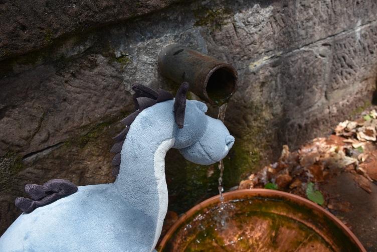 Sirius probiert das Wasser der Röxelquelle