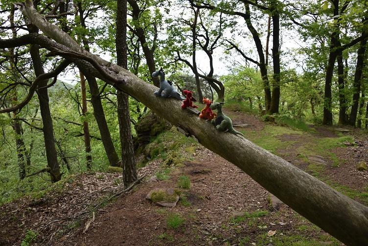Die Drachis klettern auf einem umgestürzten Baum