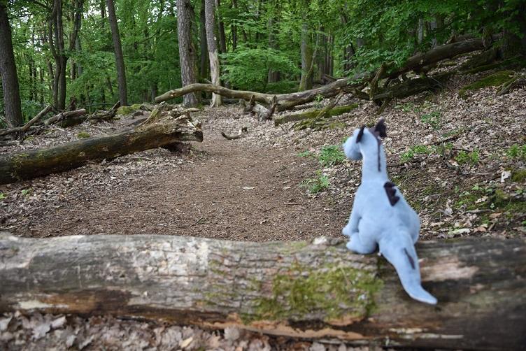 Sirius betrachtet den mit Bäumen übersäten Weg