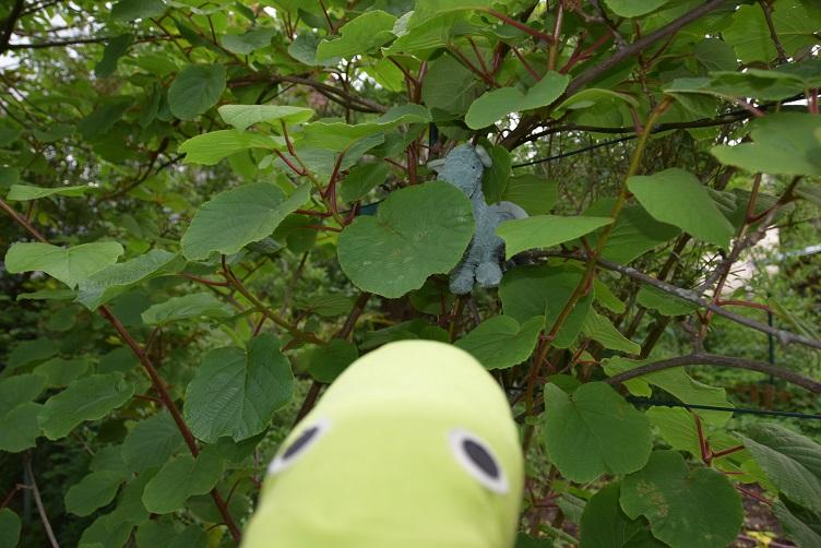 Alphabetty findet Ivy in der Kiwi