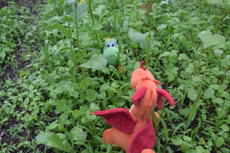 Yoshi sitzt in der Insektenblühwiese