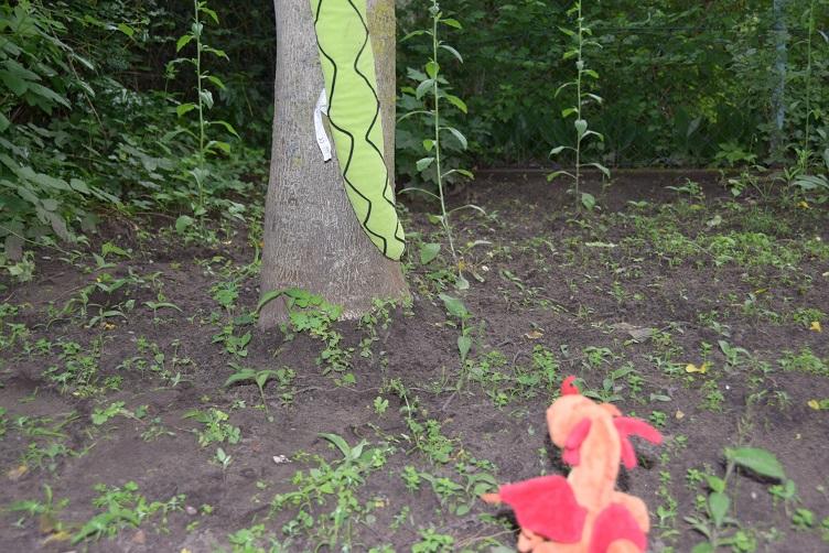 Alphabettys Schwanzspitze rutscht vom Nussbaum