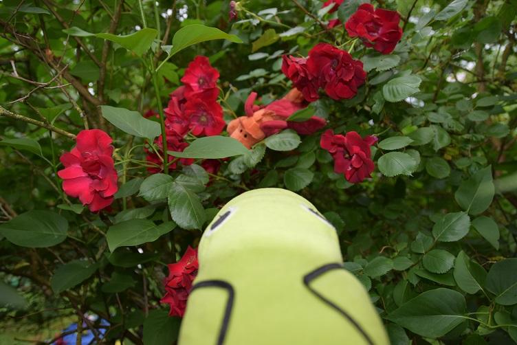 Alphabetty findet Paffina bei den Rosen
