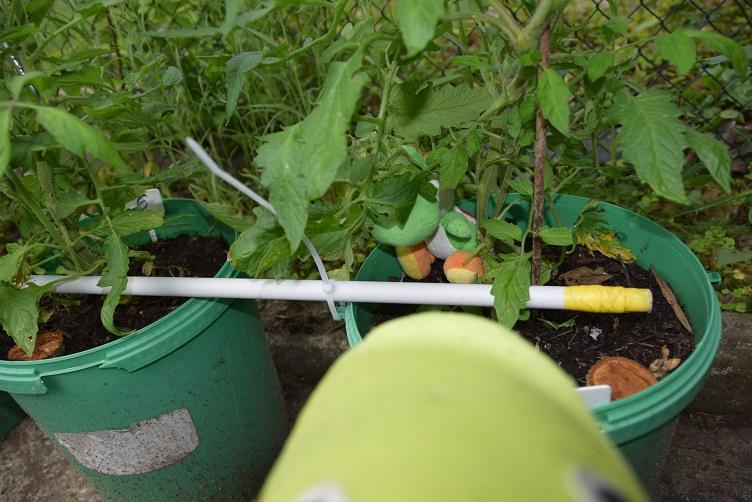 Yoshi hat sich bei den Tomatenpflanzen versteckt