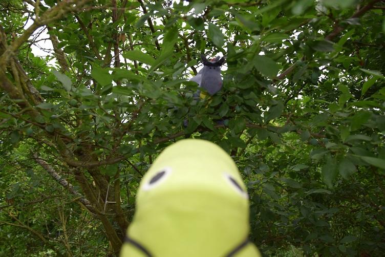 Luna guckt aus dem Mirabellenbaum und Alphabetty direkt in die Augen