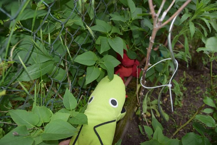 Alphabetty findet Flämmchen hinter den Rosen