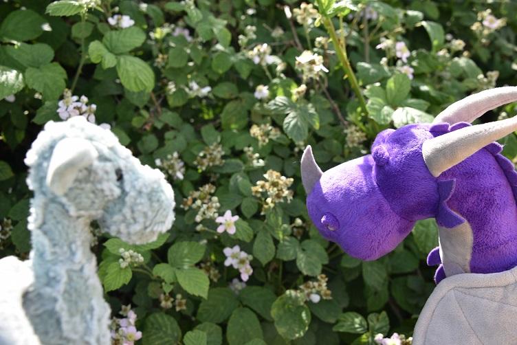 Ivy zeigt Violetta Brombeerpflanzen
