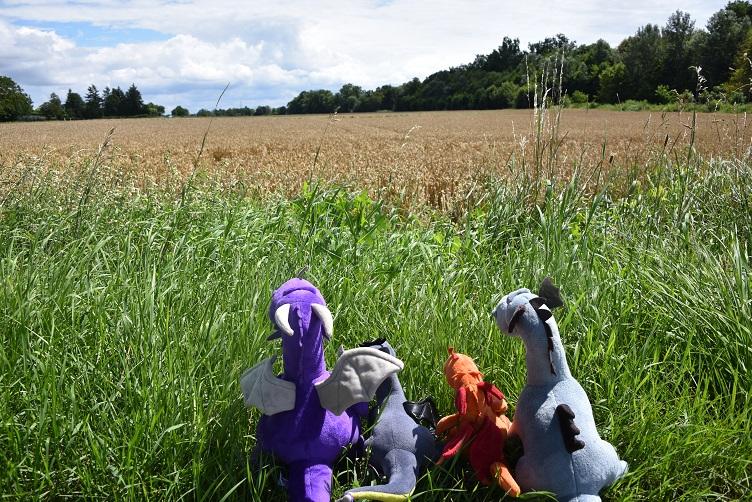 Die Drachen schauen sehnsüchtig auf ein Feld