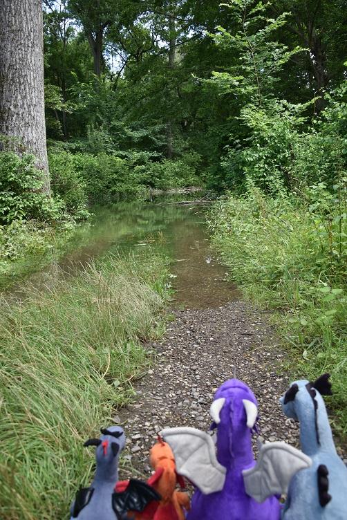Die Drachis stehen vor einem überfluteten Weg
