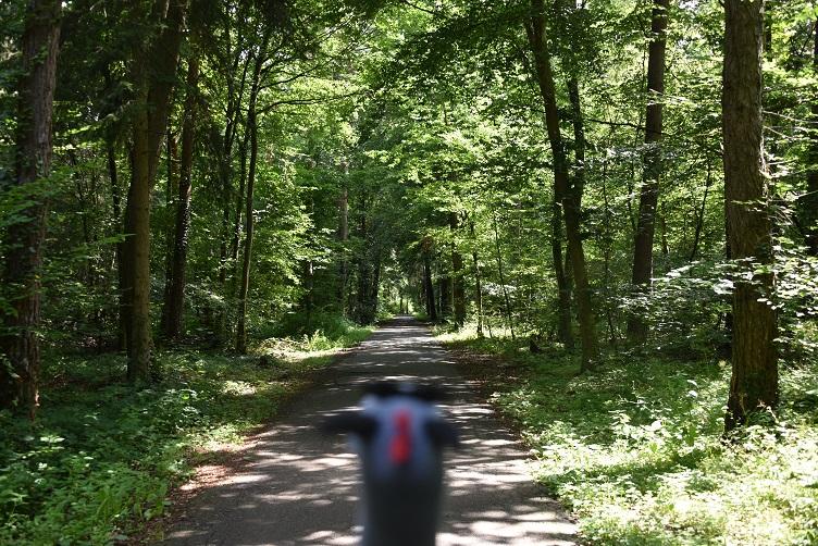 Luna guckt den Waldweg runter