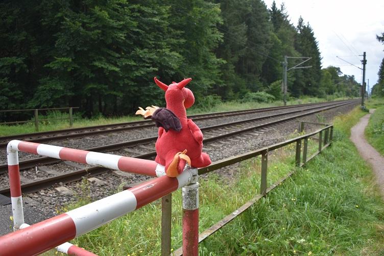 Chilli schaut an den Gleisen anch rechts
