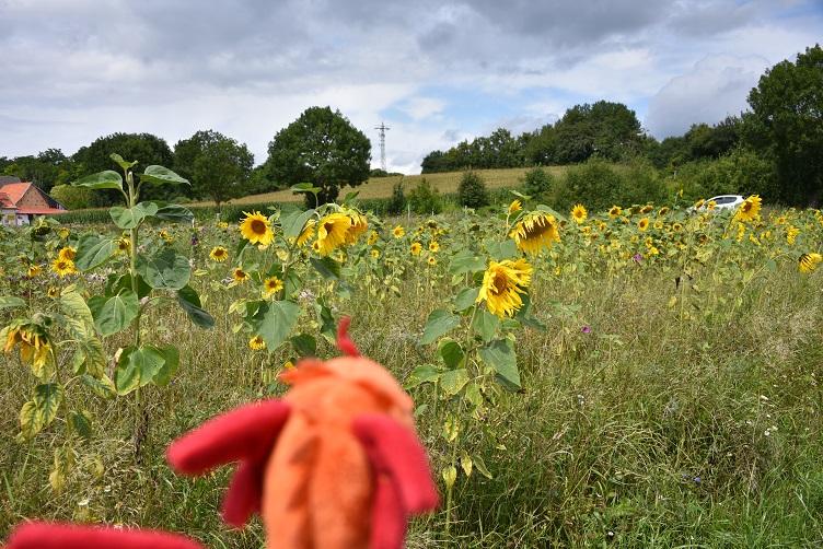 Paffina betrachtet eine Blumenwiese