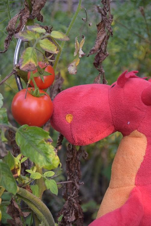 Chilli mit Tomaten