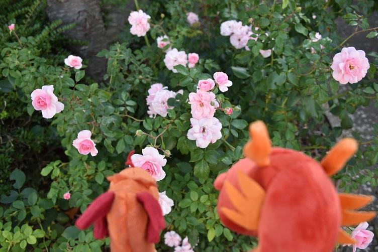 Paffina zeigt Eldur Blumen