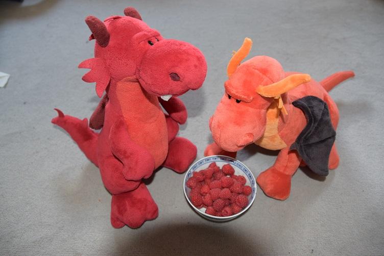 Ruby gibt Eldur ein Schälchen Himbeeren