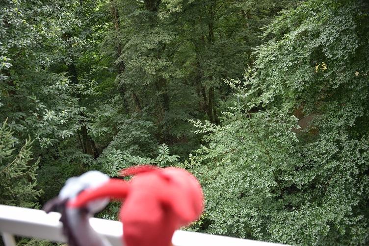 Chilli und Saphira gucken vom Balkon