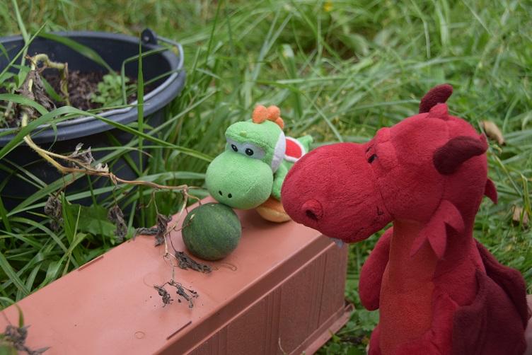 Ruby und Yoshi begutachten die Melonen